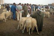 Fermeture du marché et points de vente de bétail prise par l'APC de Ain Oulmène après la confirmation de cas de fièvre aphteuse