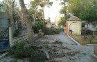 « Massacre à la tronçonneuse » de pins centenaires » du seul espace vert de la ville de Ain-Oulmène