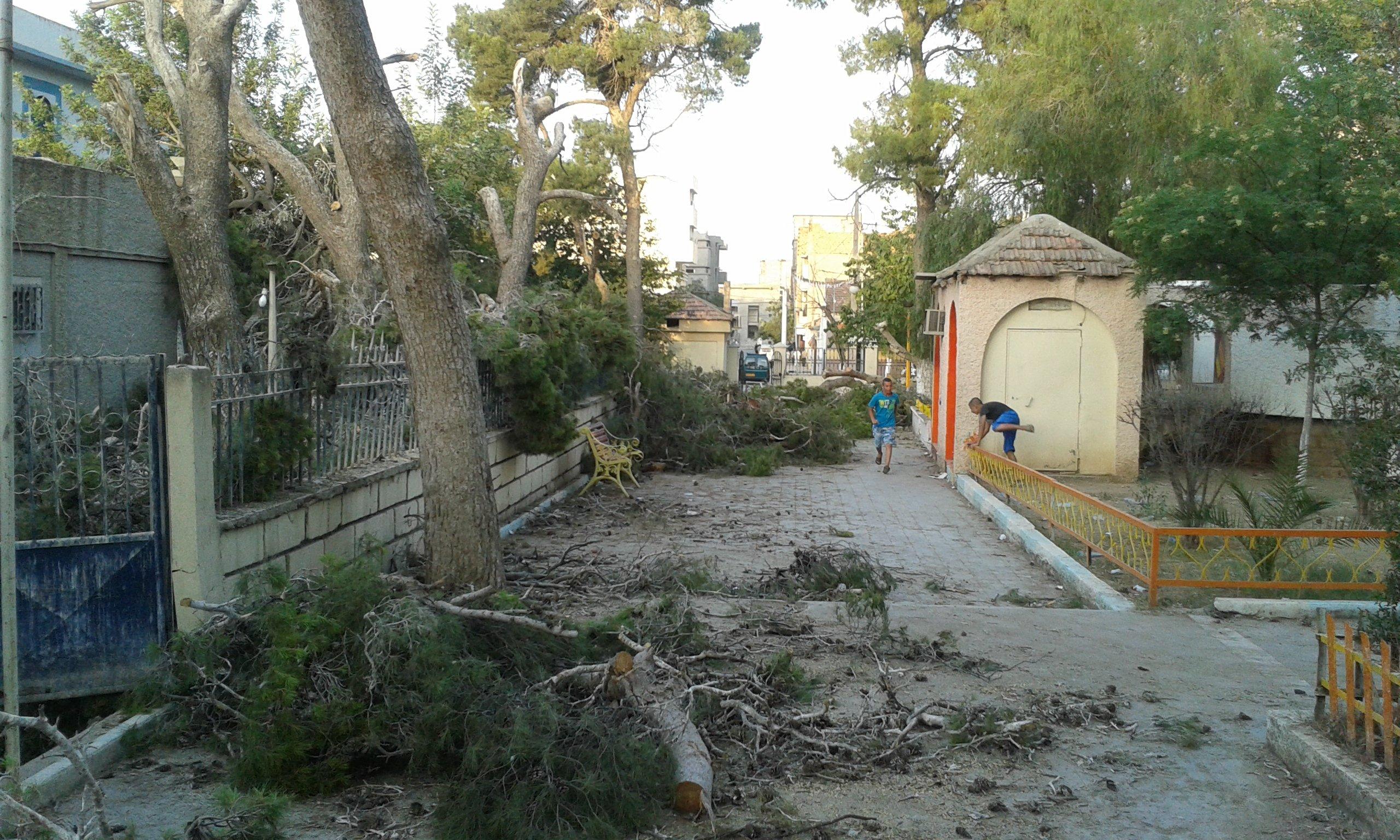 Massacre la tron onneuse de pins centenaires du for Espace vert mairie