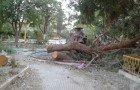 Premières photos du «massacre à la tronçonneuse» des pins centenaires du jardin public,seul espace vert de la ville de Ain-Oulmène (Sétif)