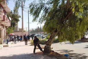 Abattage des arbres à Ain Oulmène le 14-10-2017