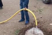 Début de l'opération de plantation d'arbustes dans les principales rues et dans les cités de la ville de Ain Oulmène